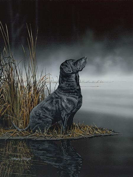 Daybreak Scout&mdash;black Lab Print<Br/>20H X 15W Art Collection