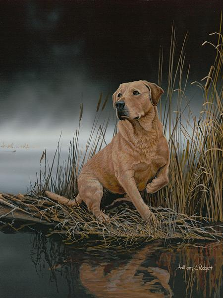 Daybreak Arrival&mdash;yellow Lab Print<Br/>20H X 15W Art Collection