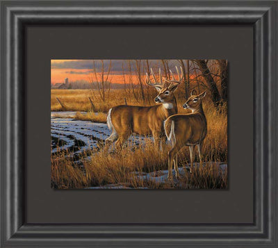 Daybreak—Whitetail Deer.