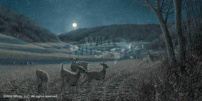<I>Night Moves&mdash;whitetail Deer</i> Limited Edition Print<Br/>17H X 34W Art Collection