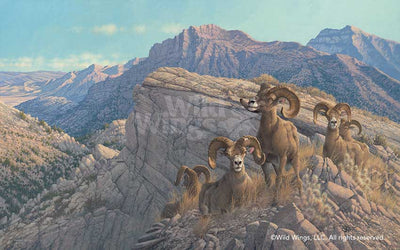 <i>Desert Kings&mdash;Bighorn Sheep</i>