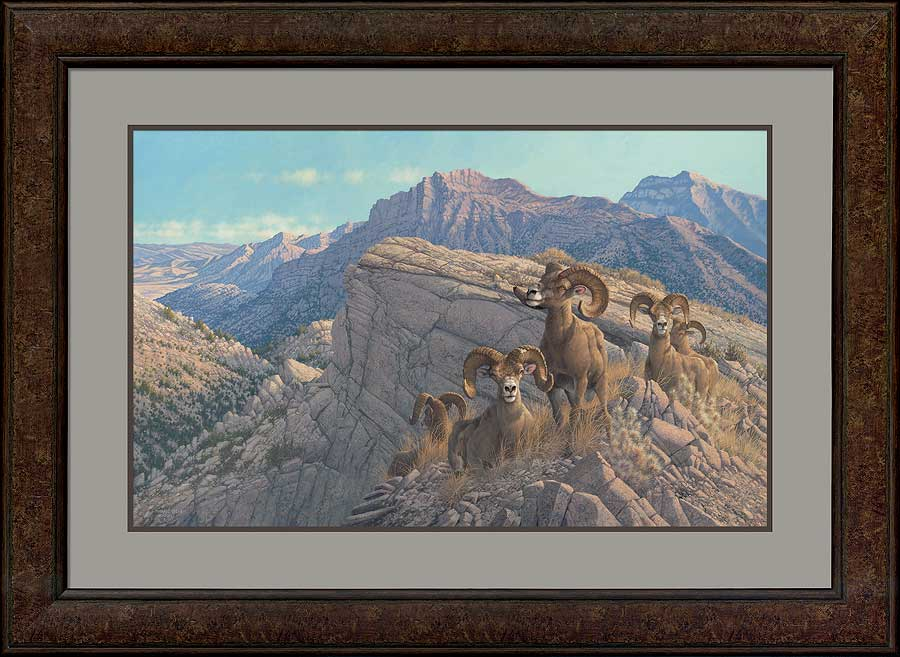 Desert Kings—Bighorn Sheep.