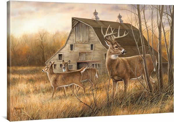 Deserted Farmstead—Whitetail Deer.