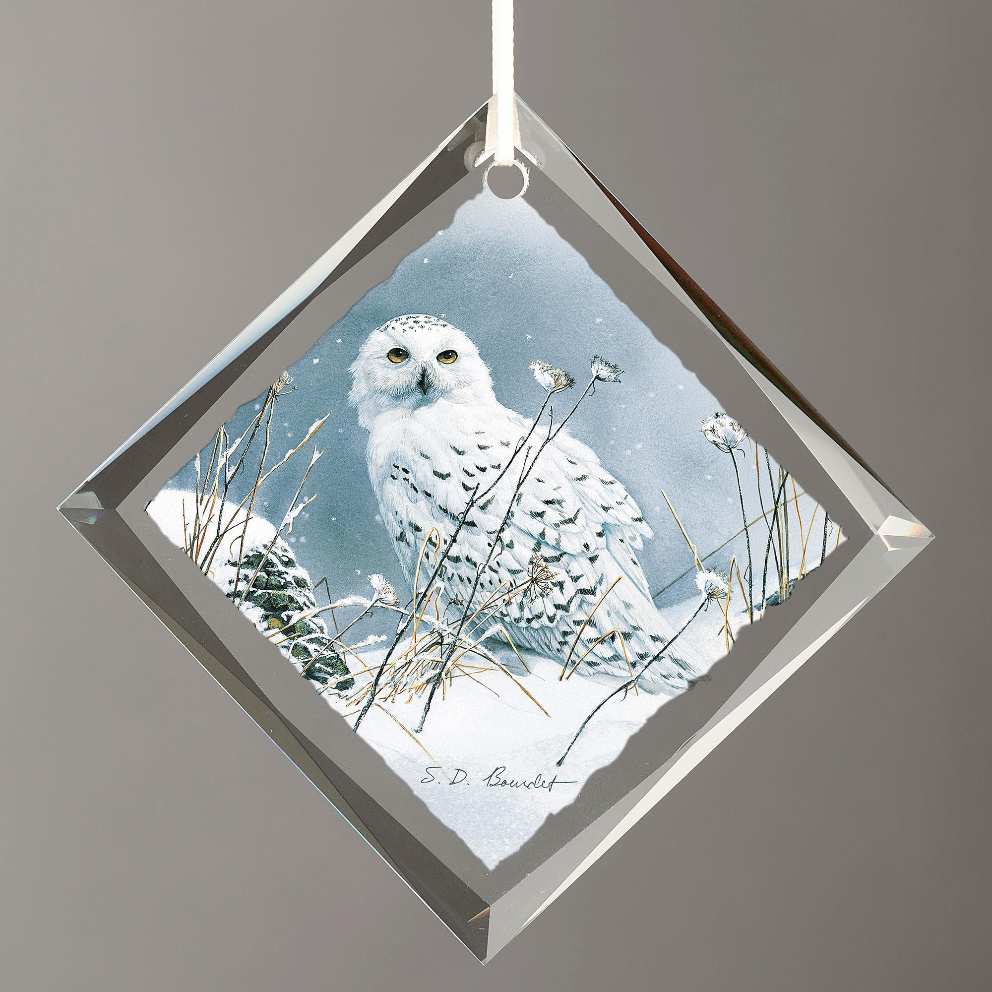 On the North Wind—Snowy Owl.