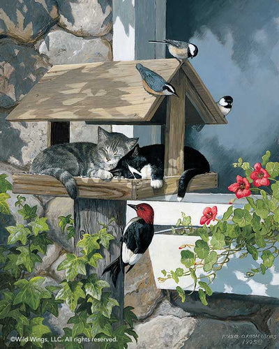 Do Not Disturb-Cats & Birds Art Collection