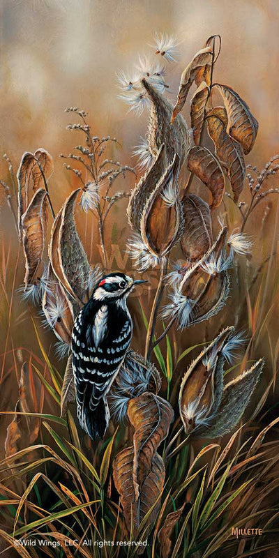 <i>Downy Woodpecker with Milkweed</i>