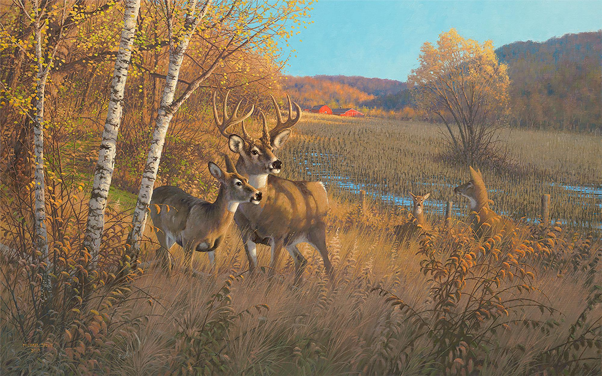 Driftless Country—Whitetail Deer.