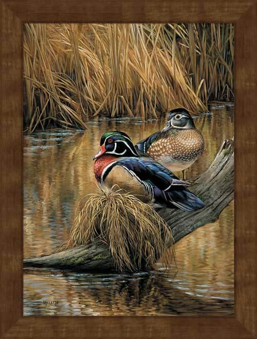 <I>Backwaters&mdash;wood Ducks</i> Framed Studio Canvas<Br/>29H X 22W Art Collection