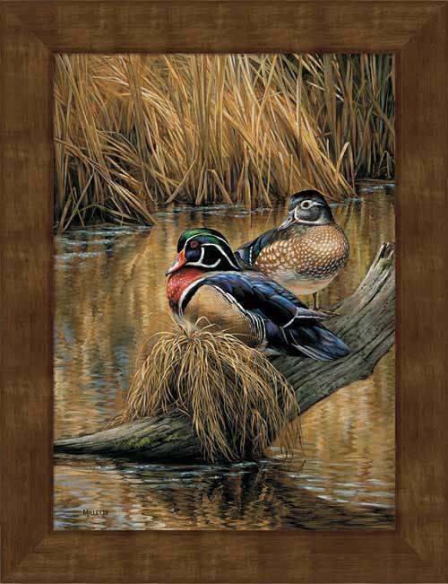 <I>Backwaters&mdash;wood Ducks</i> Framed Studio Canvas<Br/>22H X 17W Art Collection