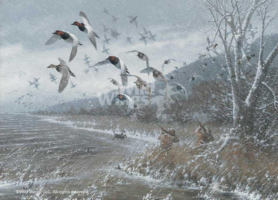 Armistice Day Hunt - Canvasbacks Art Collection