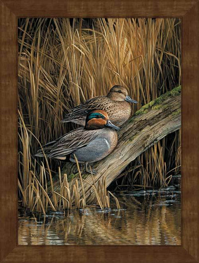 <I>Backwaters&mdash;green-Winged Teal</i> Framed Studio Canvas<Br/>29H X 22W Art Collection