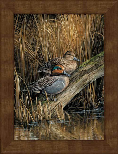 <I>Backwaters&mdash;green-Winged Teal</i> Framed Studio Canvas<Br/>22H X 17W Art Collection