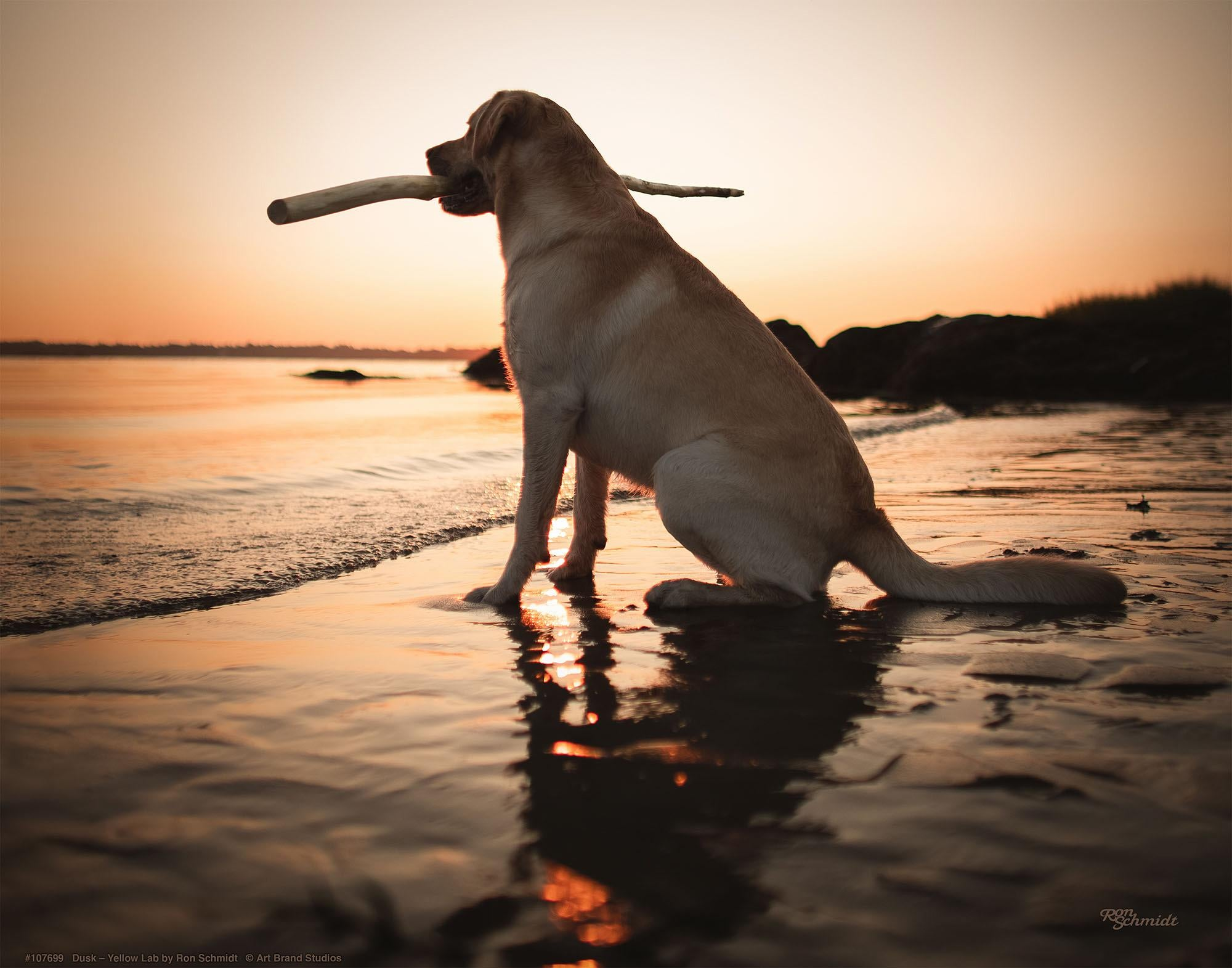 Dusk-Yellow Lab Art Collection