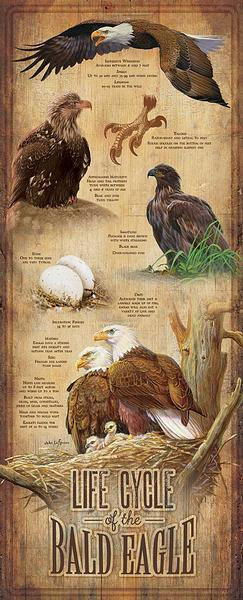 Life Cycle Of The Bald Eagle 12 X 30 Wood Sign