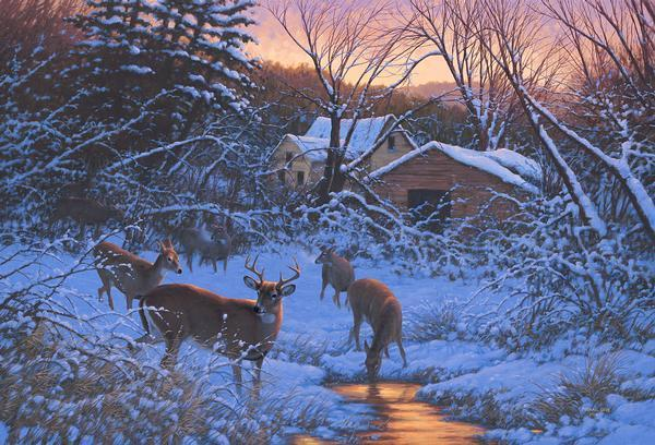 Evening Light&mdash;whitetail Deer Limited Edition Print<Br/>17H X 25W Art Collection