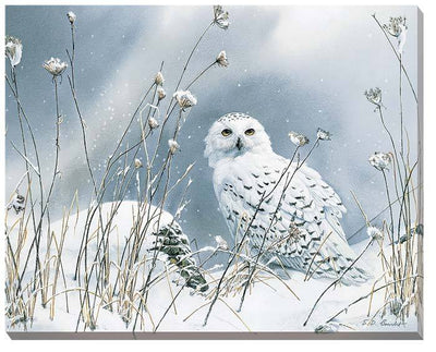 <I>On The North Wind&mdash;snowy Owl</i> Wrapped Canvas<Br/>19H X 24W Art Collection