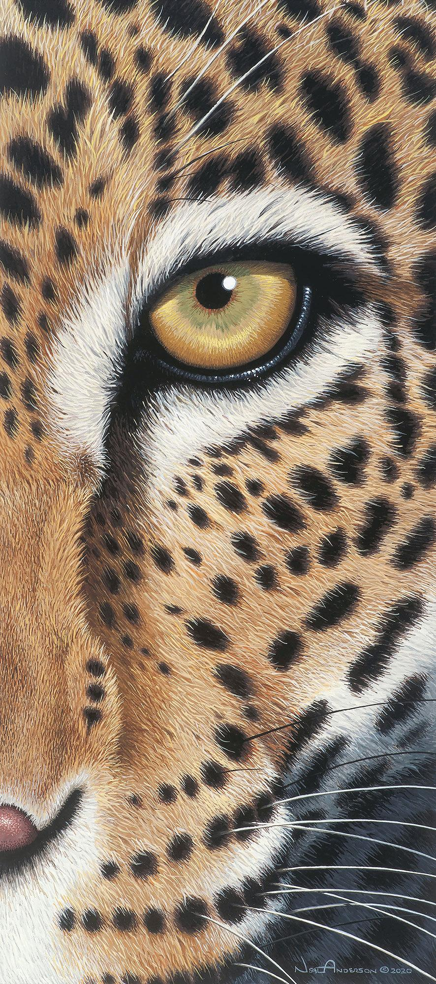 Faceoff-Leopard Art Collection