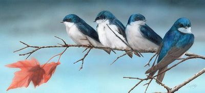 Fall&mdash;tree Swallows Limited Edition Print<Br/>7.75H X 17W Art Collection