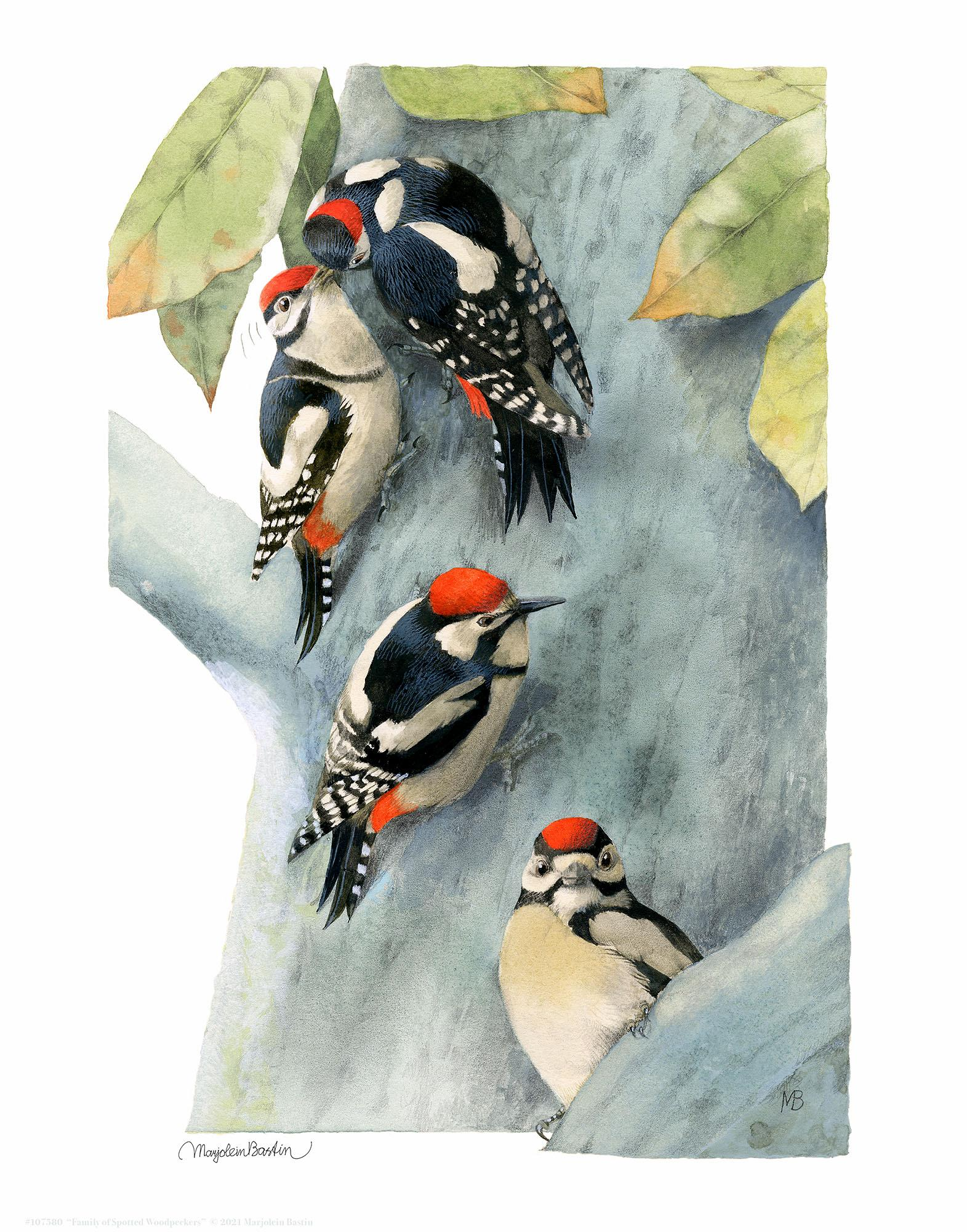 Family of Spotted Woodpeckers Art Collection