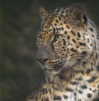 Fashion Victim—Amur Leopard.