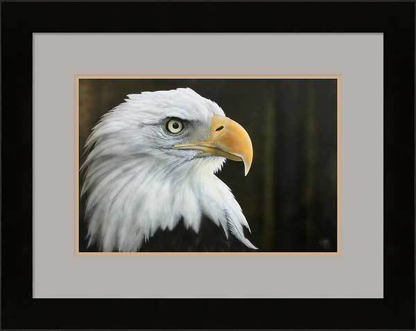 All He Surveys&mdash;bald Eagle Framed Limited Edition Print<Br/>20.75H X 26W Art Collection