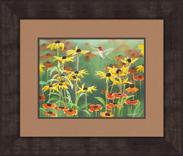 Annas Hummingbird In Blackeyed Susans Framed Print<Br/>24H X 28W Art Collection