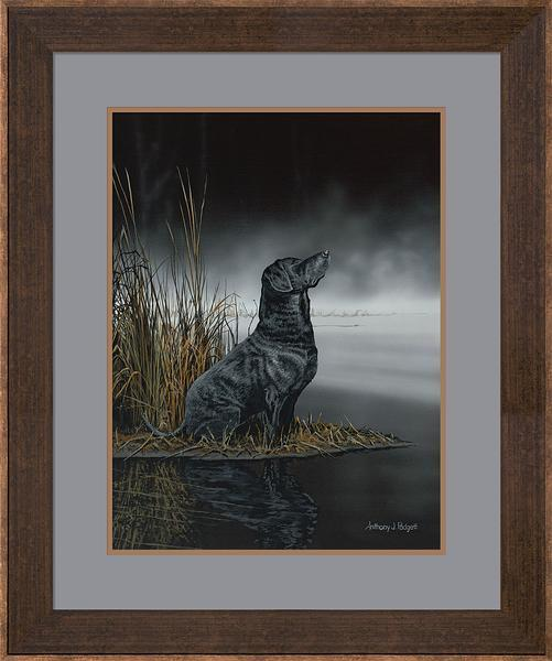 Daybreak Scout&mdash;black Lab Framed Print<Br/>30H X 25W Art Collection