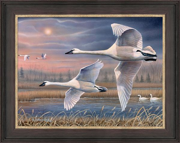 Evening Flight&mdash;trumpeter Swans Framed Limited Edition Canvas<Br/>25.5H X 19.5W Art