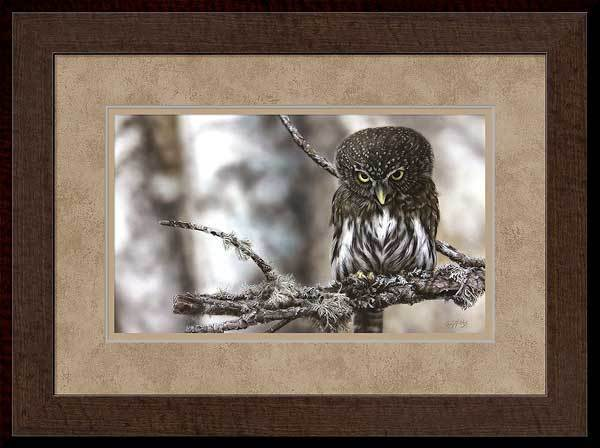 Locked On&mdash;northern Pygmy Owl Framed Limited Edition Print<Br/>20.5H X 27.5W Art