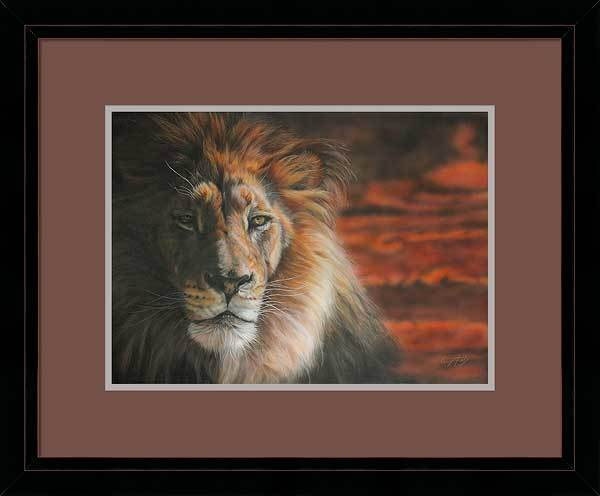 Pride—African Lion