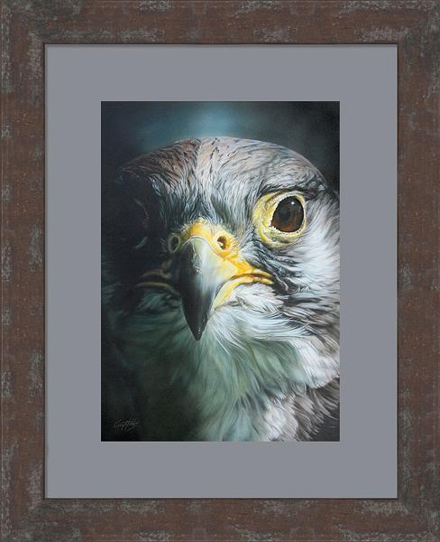 Radiance&mdash;saker Falcon Framed Limited Edition Print<Br/>25.5H X 20.75W Art Collection