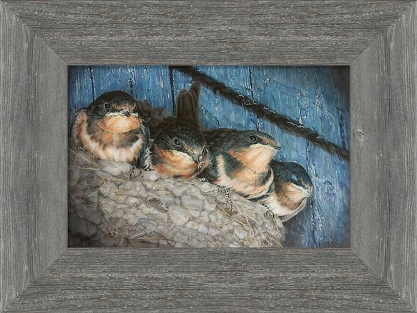<I>Urban Overcrowding&mdash;barn Swallow Fledglings</i> Framed Limited Edition Canvas<Br/>14.25H X