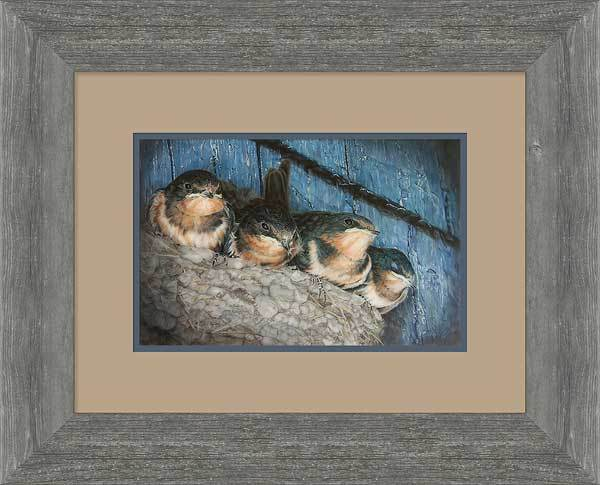 Urban Overcrowding&mdash;barn Swallow Fledglings Framed Limited Edition Print<Br/>19.5H X