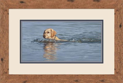 Yellow Lab Swimming Art Collection