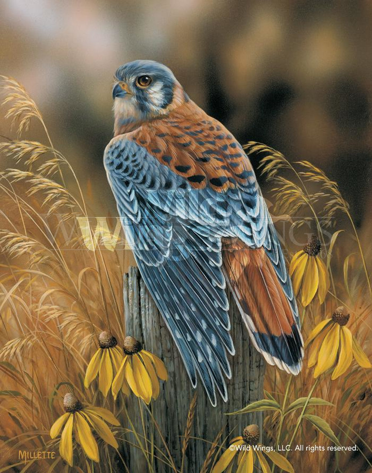 <I>Fencepost Perch&mdash;kestrel</i> Print<Br/>14H X 11W Art Collection