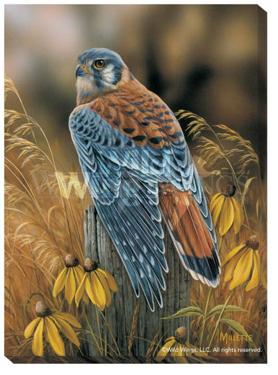 <I>Fencepost Perch&mdash;kestrel</i> Wrapped Canvas<Br/>18H X 13W Art Collection