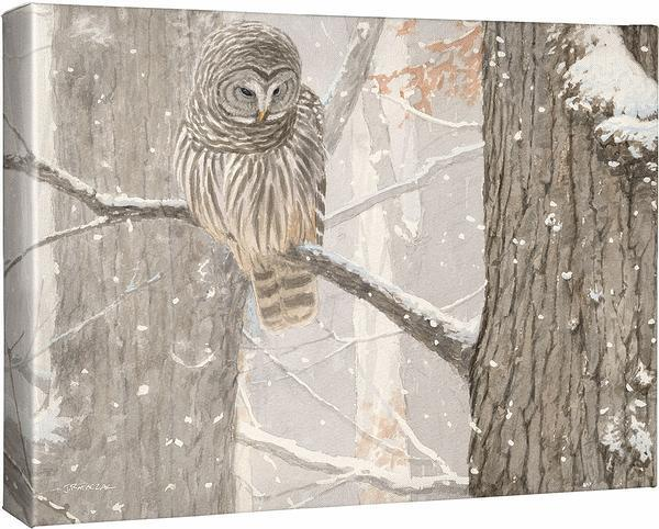First of December—Barred Owl.