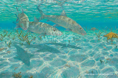 <i>Ghosts&mdash;Bonefish</i>