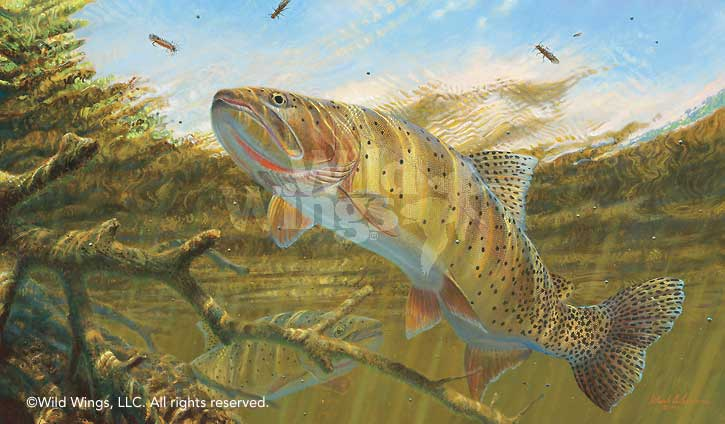 Matching the Hatch-Cutthroat Trout Art Collection