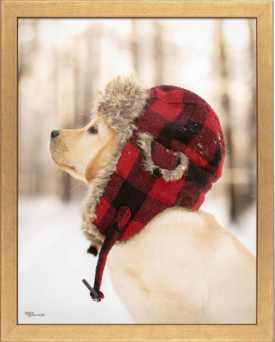 Flannel—Yellow Lab.