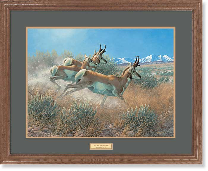 Flat Out-Pronghorns Art Collection