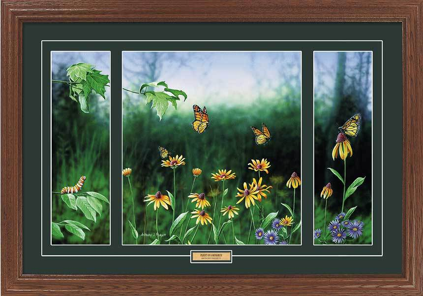 Flight Of A Monarch Butterfly Framed Limited Edition Print