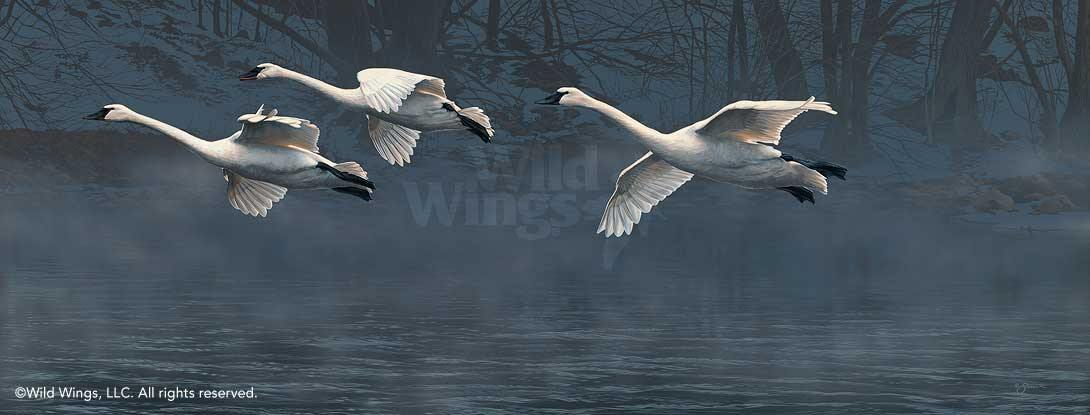 Nature's Grace—Flying Swans.