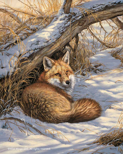 Restful Moment—Fox.