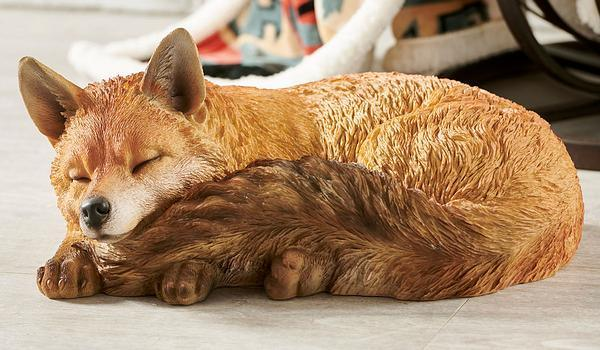 Adult Sleeping Fox.