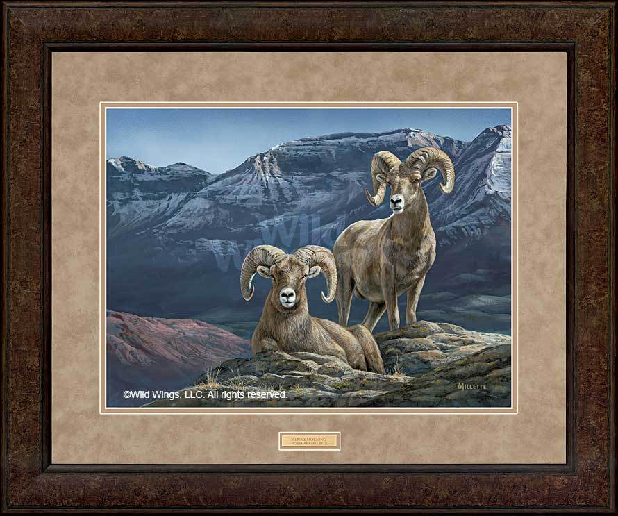 <I>Alpine Morning&mdash;bighorn Sheep</i> Gna Premium+ Framed Print<Br/>35H X 36W Art Collection