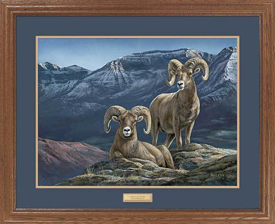 <I>Alpine Morning&mdash;bighorn Sheep</i> Gna Premium Framed Print<Br/>25H X 31W Art Collection