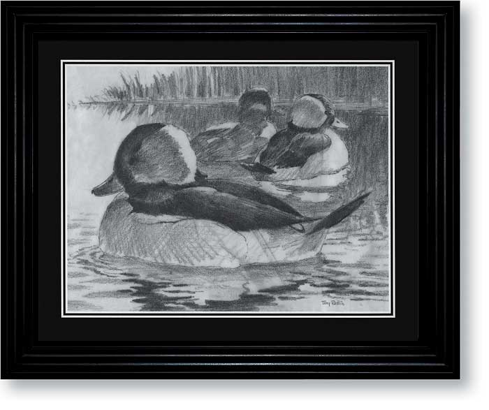 Bufflehead Art