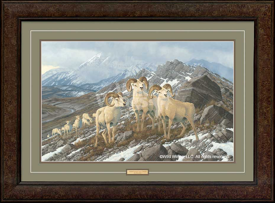 Alpine Kings-Dall Sheep Art Collection