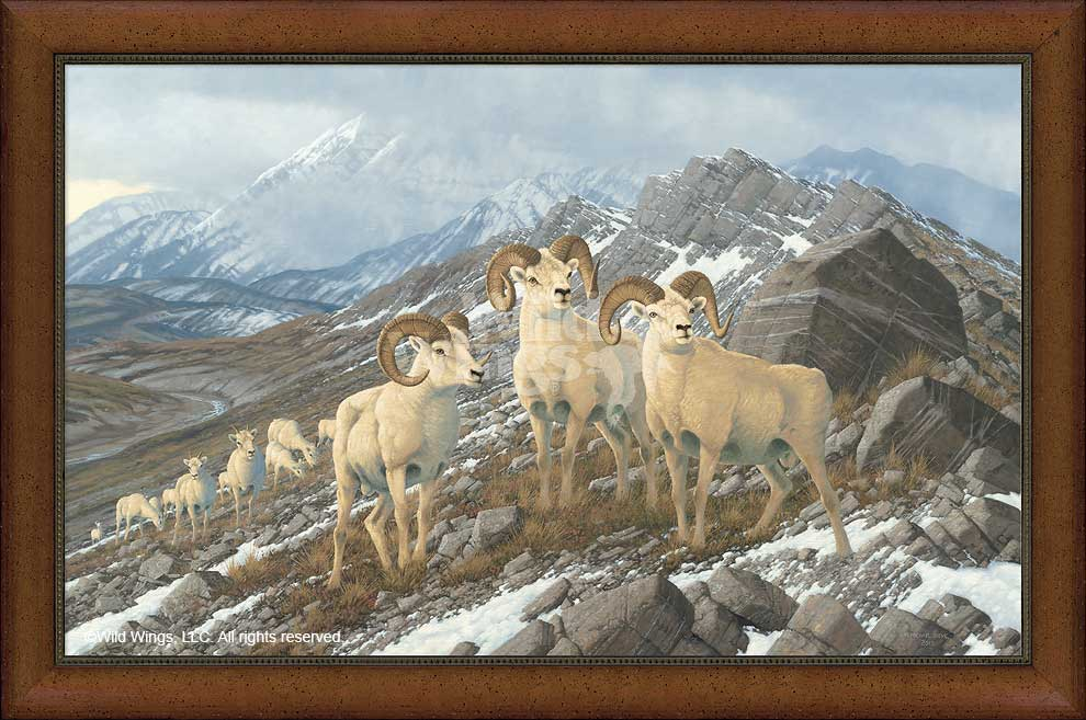 <i>Alpine Kings&mdash;Dall Sheep</i>